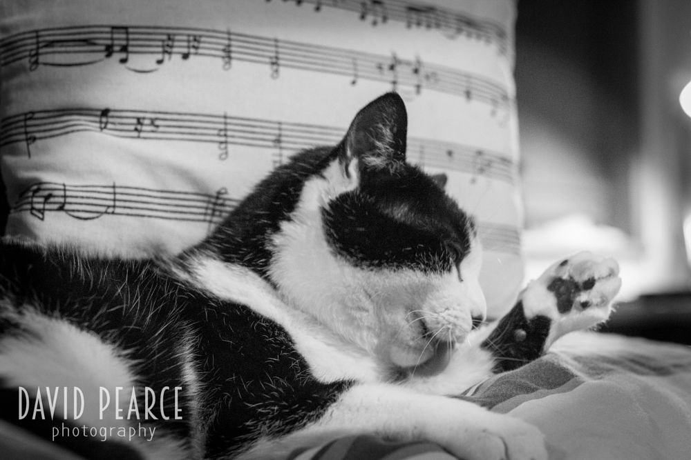 Photo in Black and White #cat #animal #nature #black and white