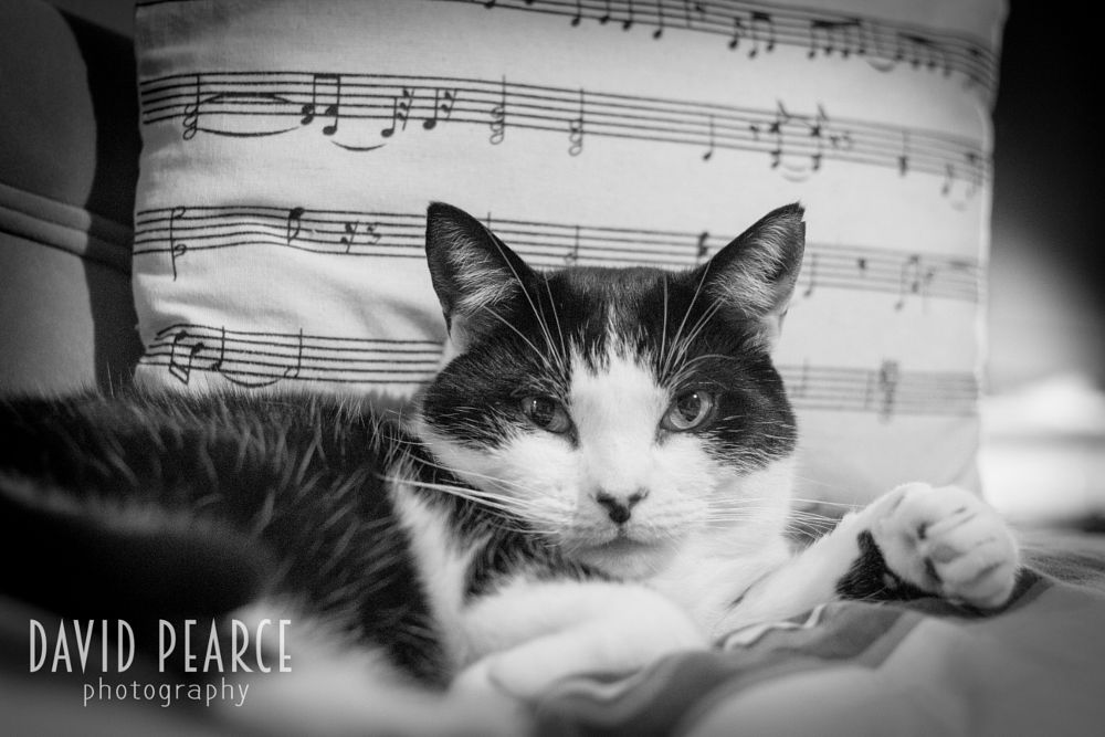 Photo in Black and White #cat #music #nature #black and white #animal