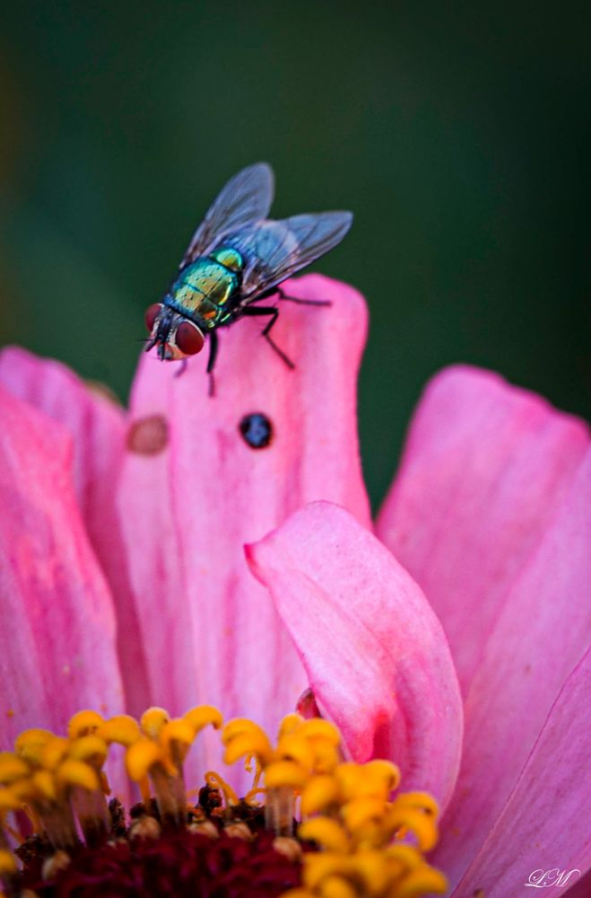 Photo in Macro #macro #insects #nature
