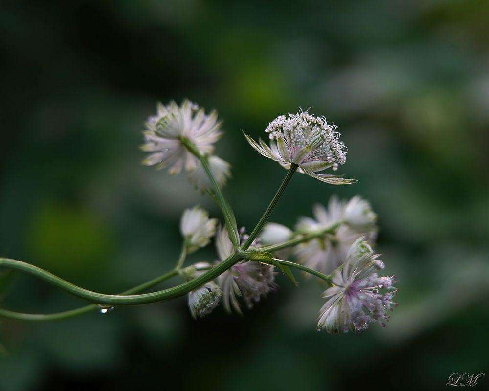 Photo in Nature #flower #garden #summer