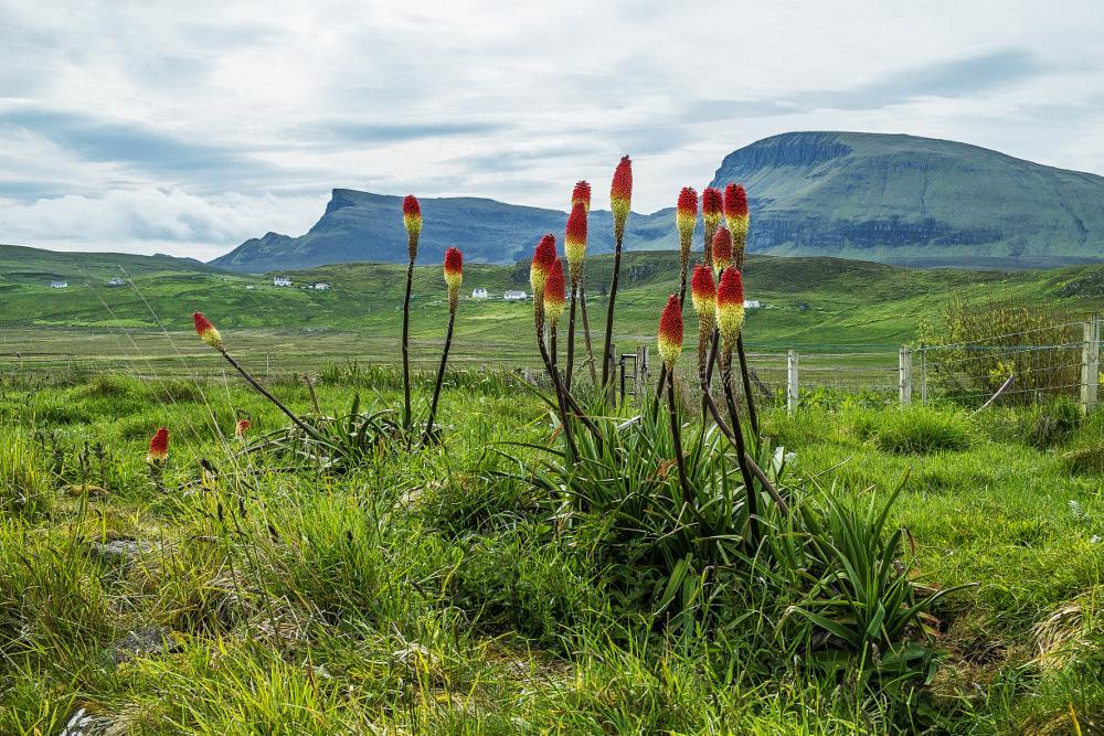 Photo in Landscape #scotland #skye #flowering #plants