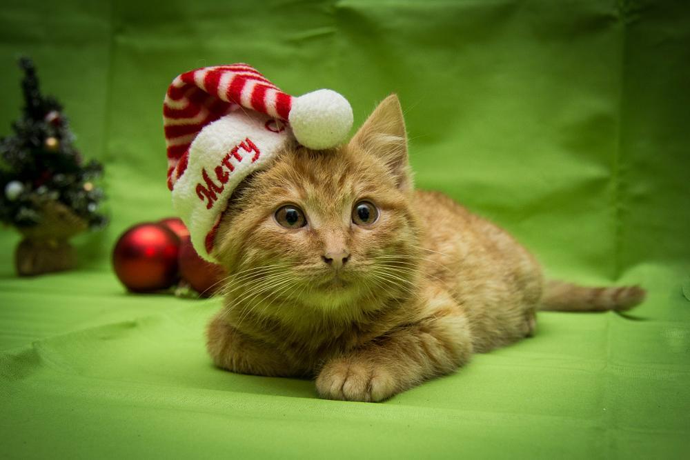 Photo in Animal #kitten #constanta #romania #story #christmas