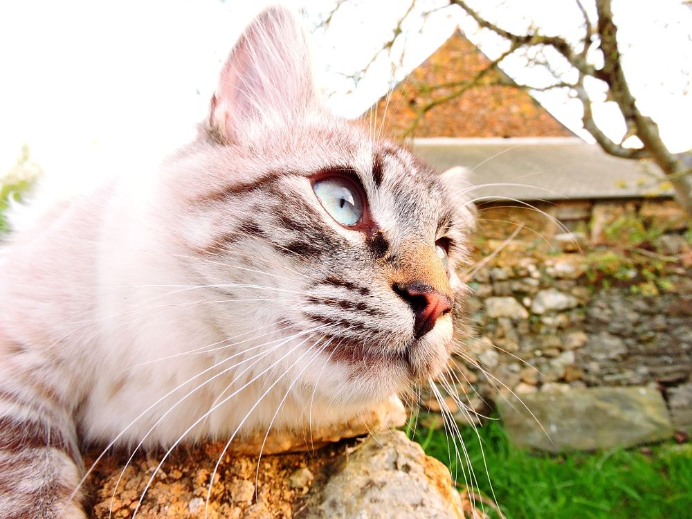 Photo in Animal #cat #animal #wall