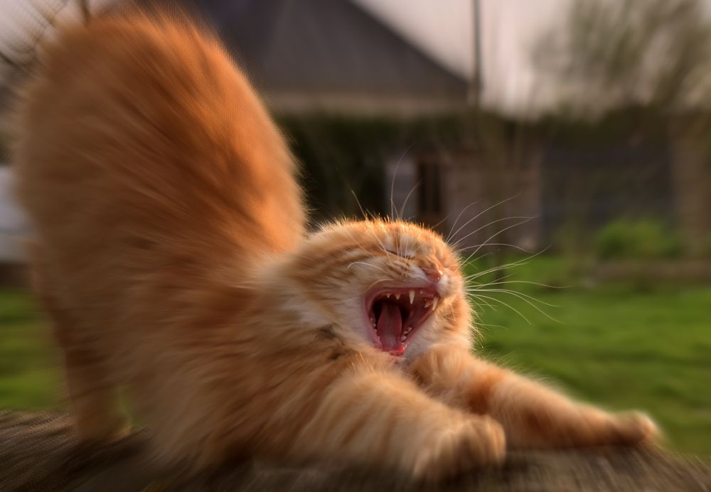 Photo in Animal #cat #chat #animal