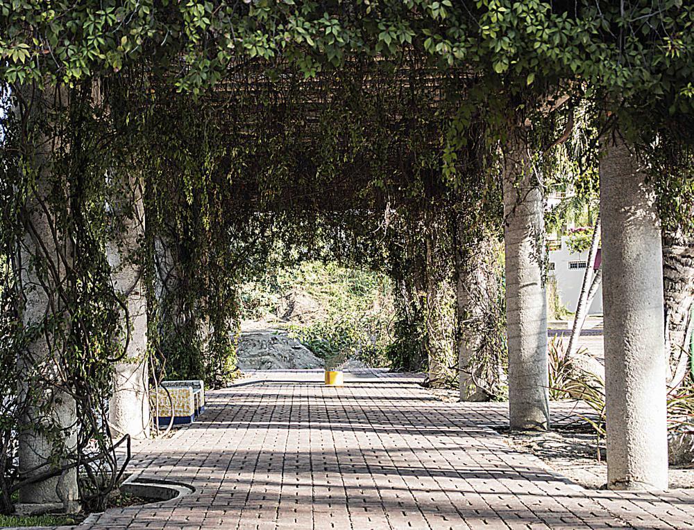 Photo in Urban #arbustos #silencio #descanso