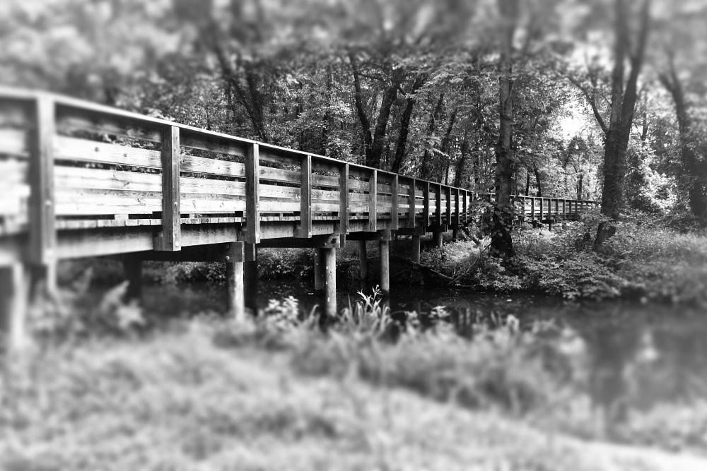 Photo in Landscape #bridge #blackandwhite #creek