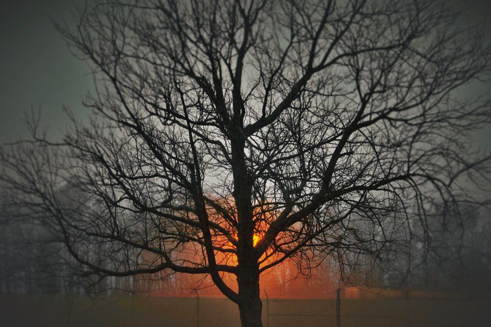 Photo in Random #tree #light #dusk #foggy #glowing