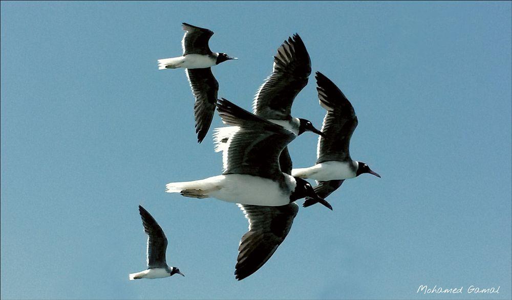 Photo in Random #birds #sky #sunny #fly #speed