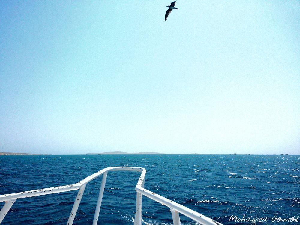 Photo in Random #boat #bird #sea #sky #blue #fly #egypt