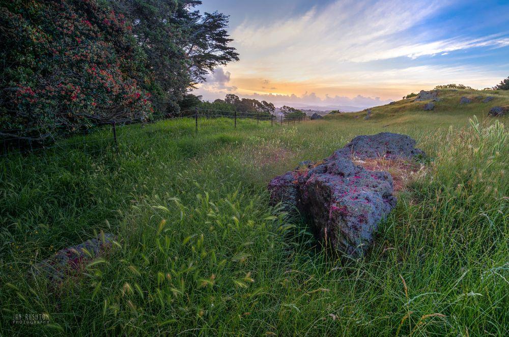 Photo in Landscape #grass #pasture #field #rock #auckland #new zealand