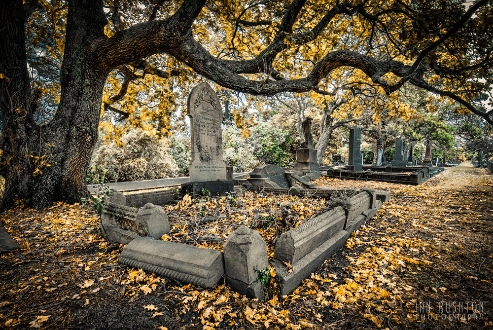 Photo in Random #auckland #graveyard #tombstone #hdr #tree #cemetery