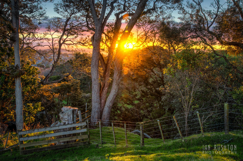 Photo in Random #auckland #sunset #trees #fence #hilltop #ypa2013