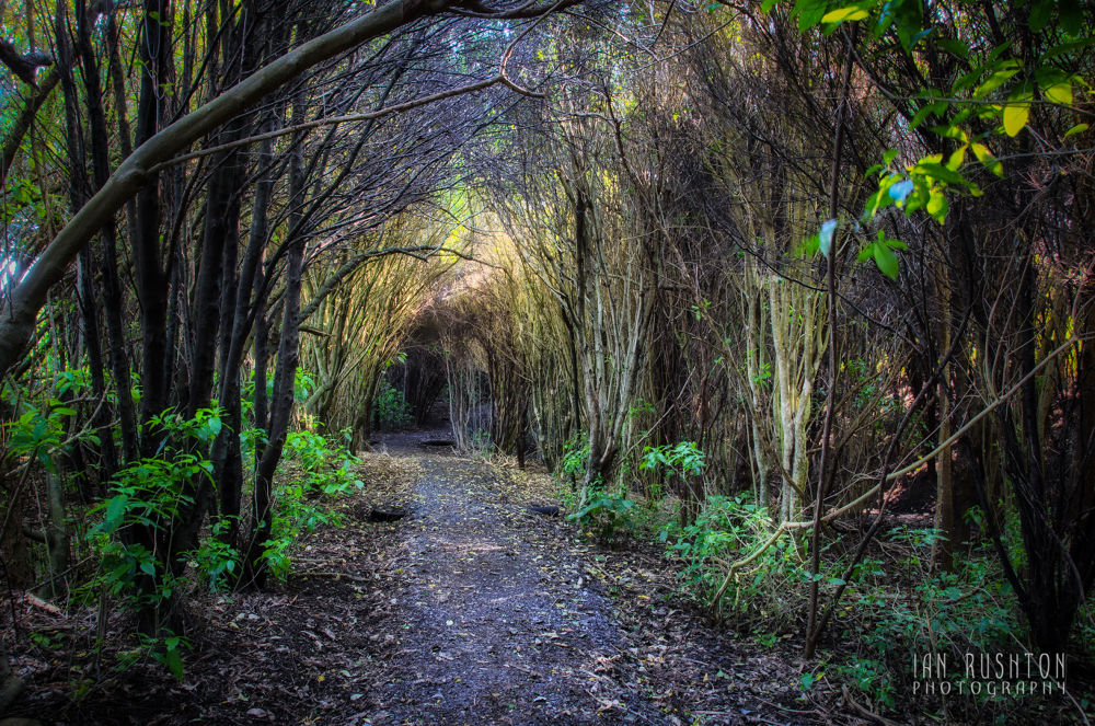 Photo in Random #trees #bush #forest #auckland #track #trail