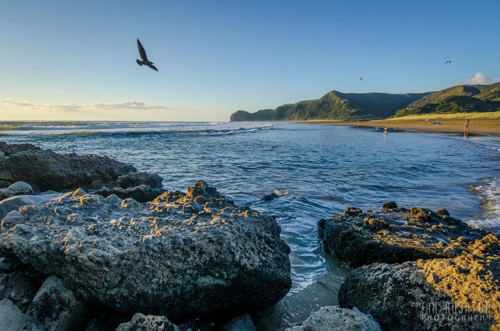 Photo in Random #sea #sand #beach #seagull #rocks #piha #auckland #new zealand
