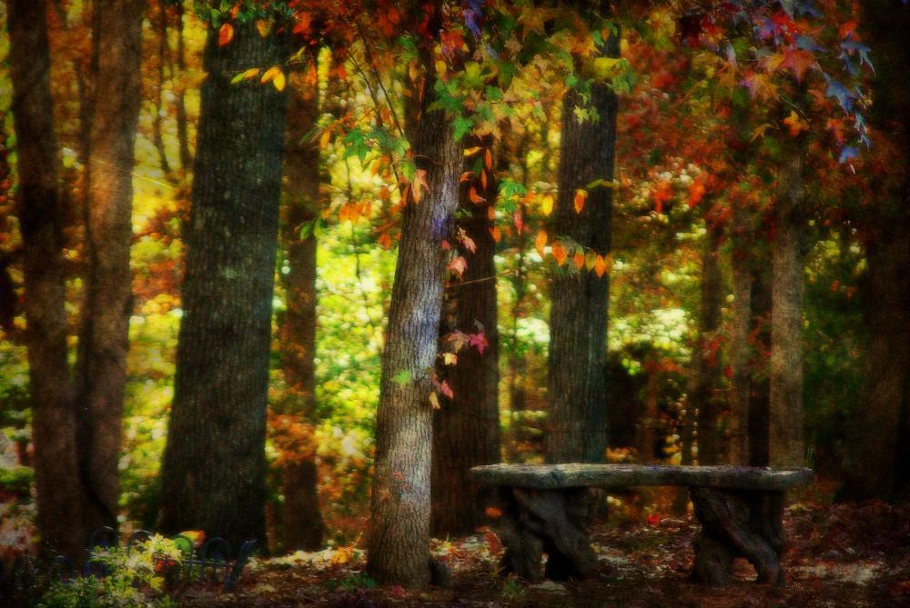 Photo in Random #autumn #fall #leaves #color #bench #rest #ginger barritt