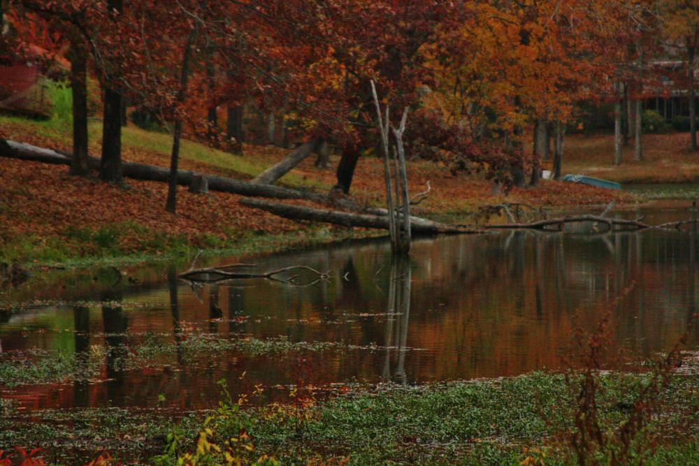 Photo in Landscape #pond #water #lake #autumn #fall