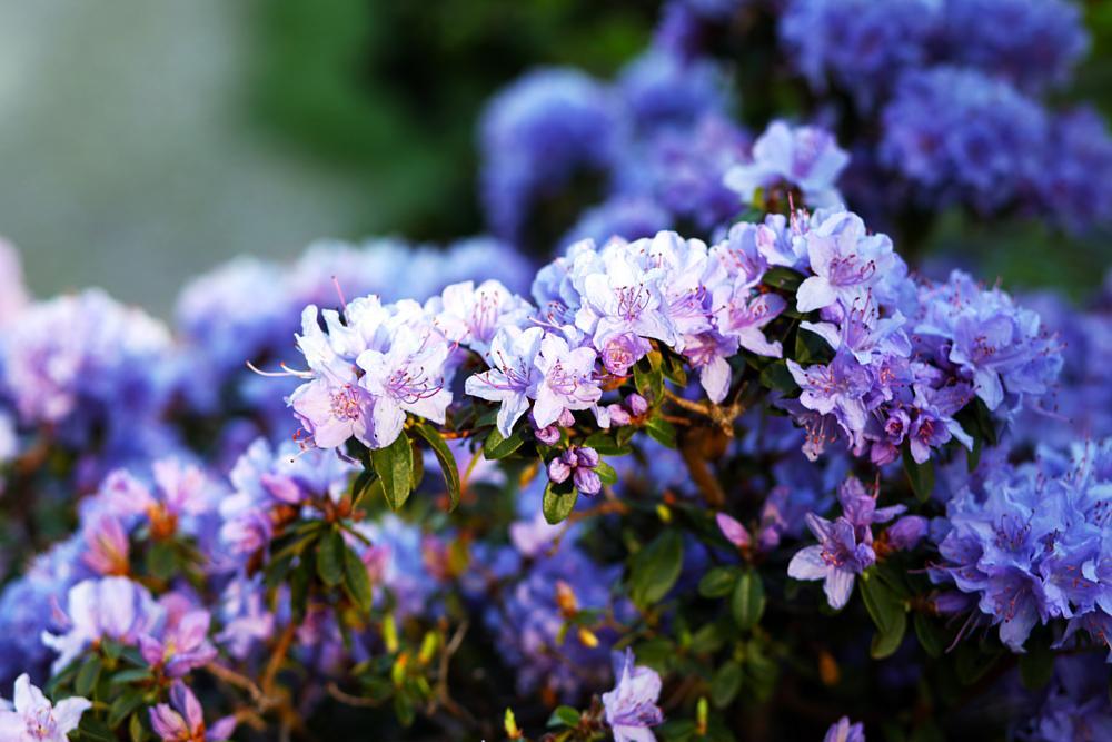 Photo in Nature #flowers #garden #summer