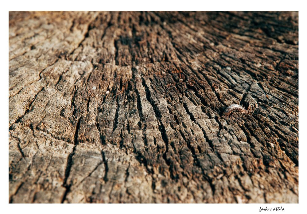 Photo in Macro #wood #macro #close-up #closeup #material #raw #industry #woods #romania #transylvania