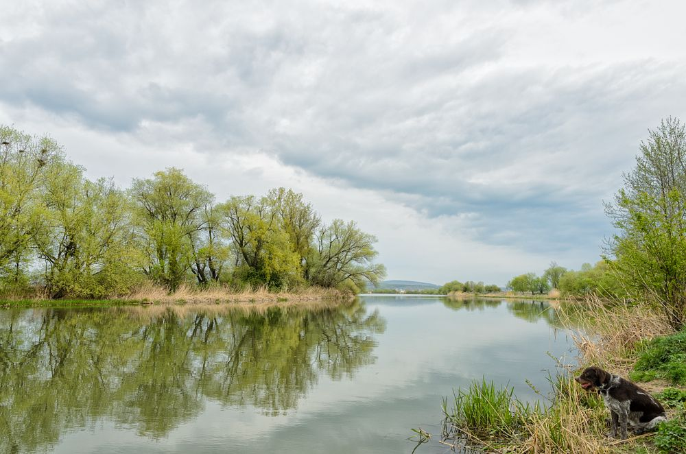 Photo in Landscape #river #clouds #spring #april #trees #tree #water #waterscape #cloudy #sky #animal #dog #pet #reed #overcast #morning