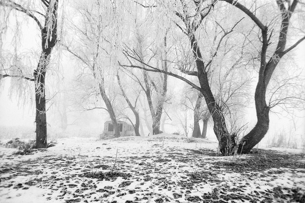 Photo in Landscape #winter #trees #landscape #tree #morning #cold #snow #rime #ice #outdoor #travel #black and white #film #analog #praktica #ilford delta 100 #fog #mist #foggy