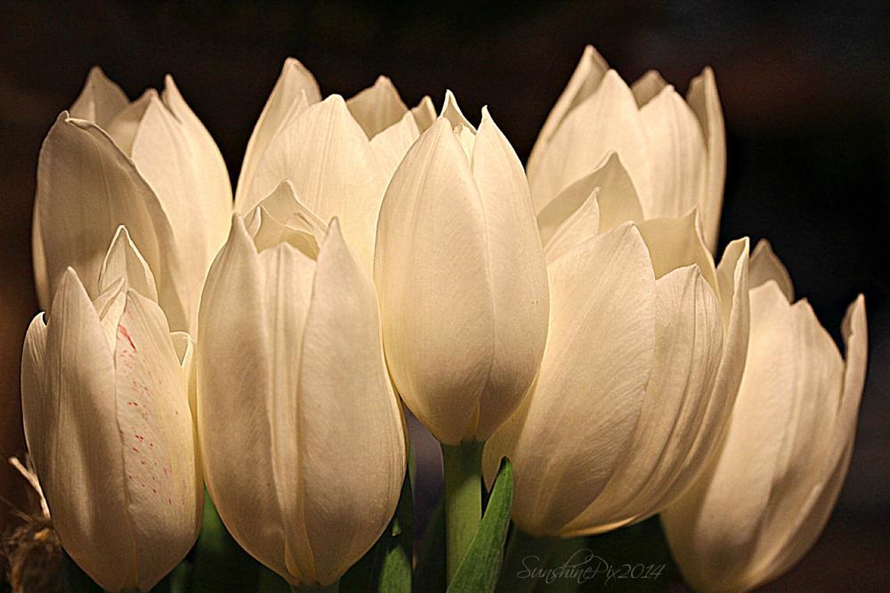 Photo in Random #flowers #tulip