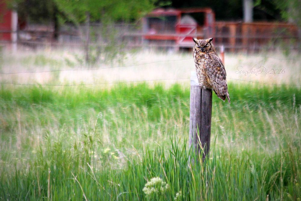 Photo in Animal #owl #bird #wildlife #nature