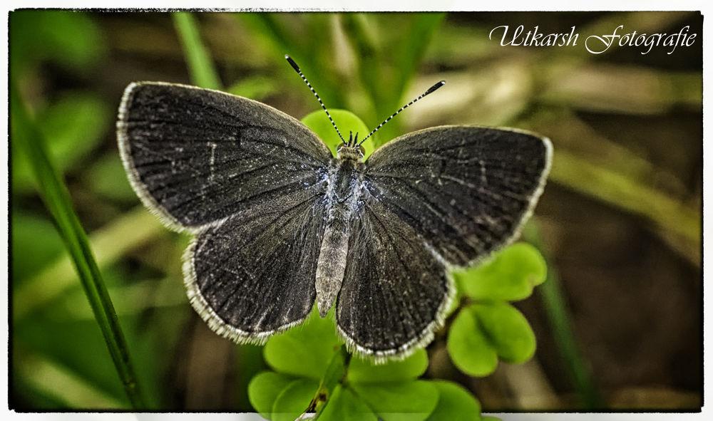 Photo in Macro #macro #butterfly #nikon d7100