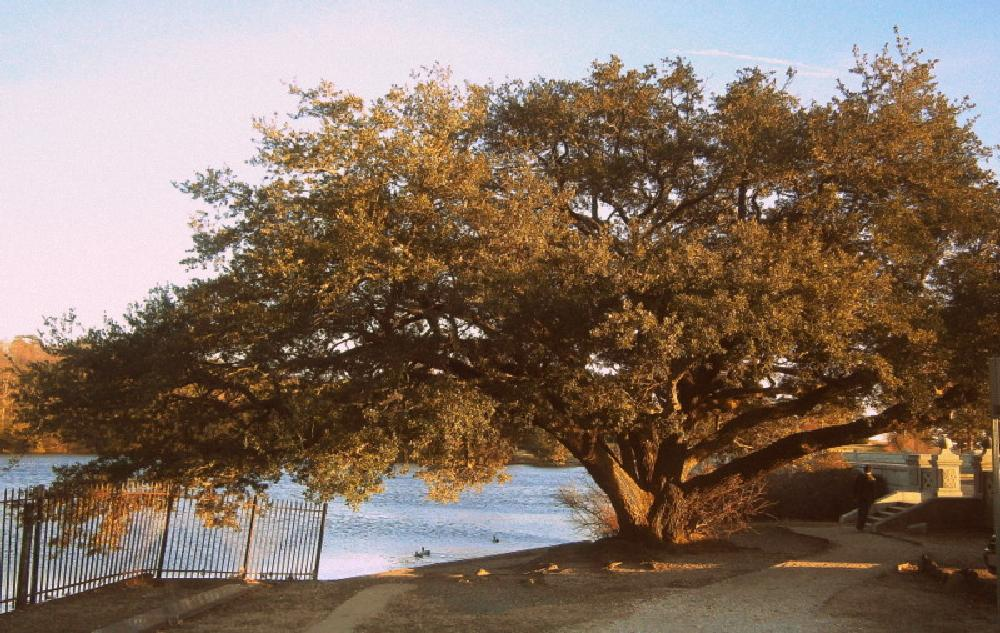 Photo in Landscape #tree #lake maury #the noland trail #afternoon #sunny