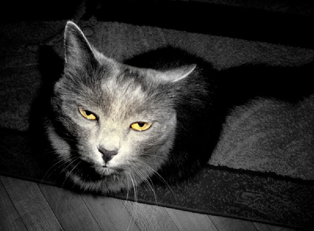 Photo in Animal #cat #close-up #cute face #yellow eyes #pet