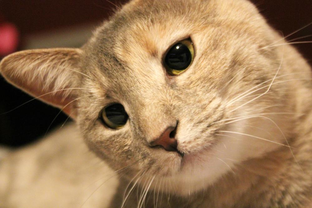 Photo in Animal #cat #eyes #pet #feline #kitten #animal #mammal