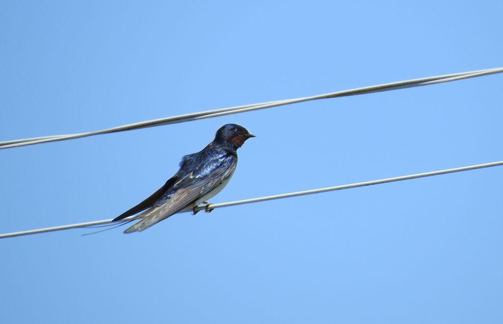 Photo in Animal #wildbird #gotland #island #spring #canon