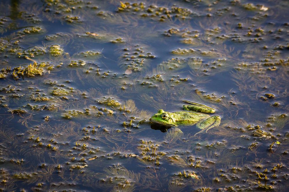 Photo in Animal #toad #animal #water #creek