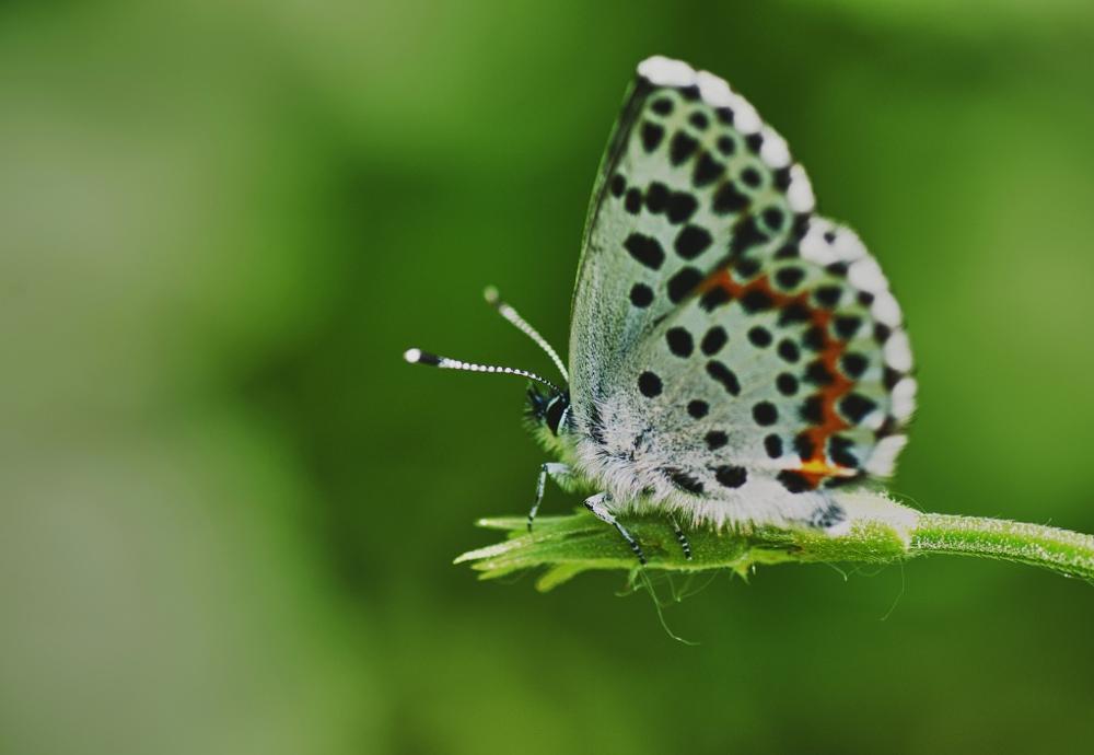 Photo in Macro #macro #closeup #closeup #farfalla #farfalle #insetti #batterfly #natura #nature #nikon.