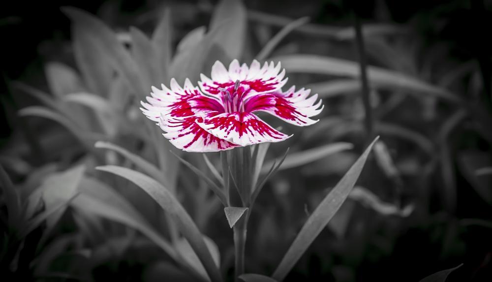 Photo in Nature #flower #red #nature #poplar #estate #nikon #wilmington #north carolina