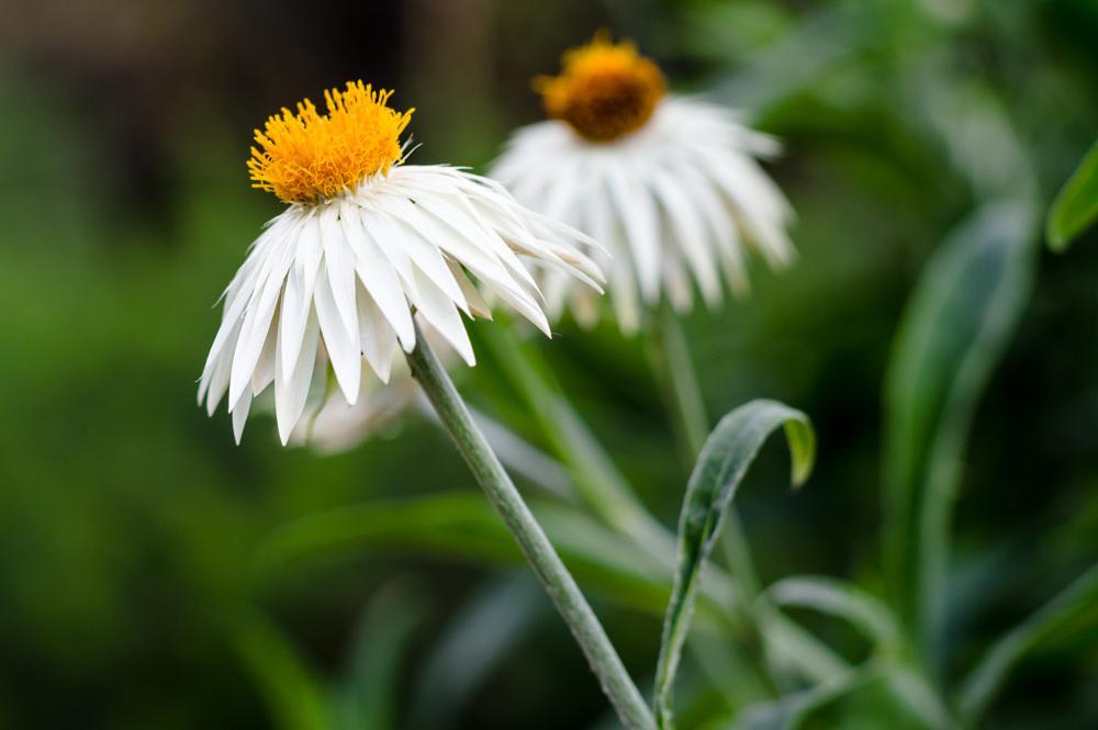 Photo in Nature #flower #nikon #seise #sweden