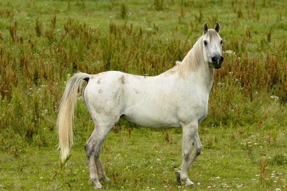 Photo in Animal #horse #canon