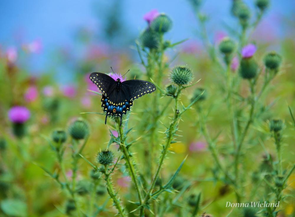 Photo in Random #butterflies #flowers #spring
