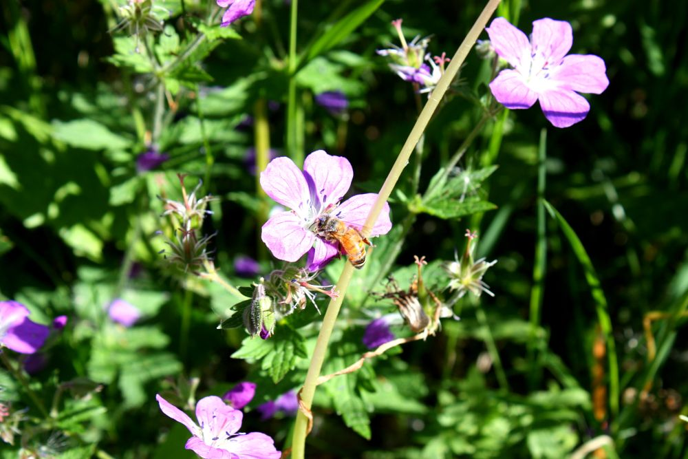 Photo in Random #insekt #blomma