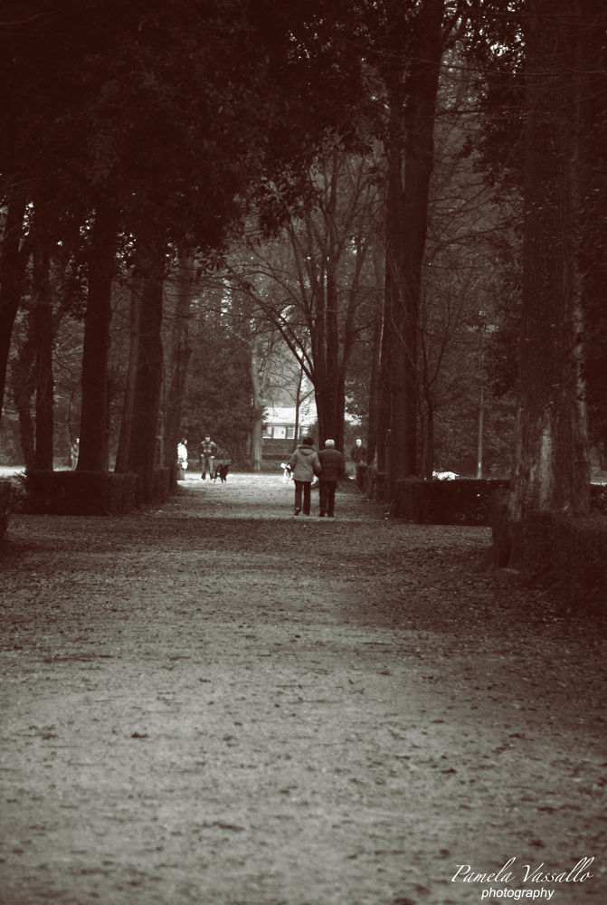 Photo in Nature #nature #cascine #florence #tree #photo #pamela vassallo photography