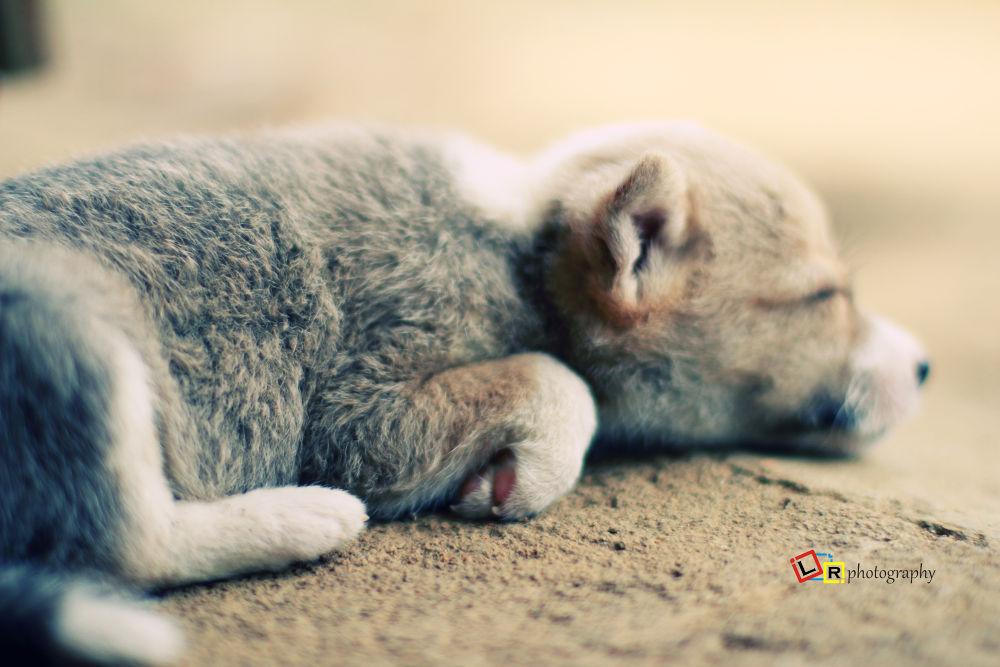 Photo in Animal #dog #family #alone #lonely #sleep #sleepy #cute #beautiful