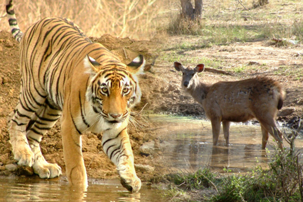 Photo in Travel #http://www.tirupatiholidays.ne #rajasthan wildlife safari tour #rajasthan #tour #travel #india #rajasthan tours