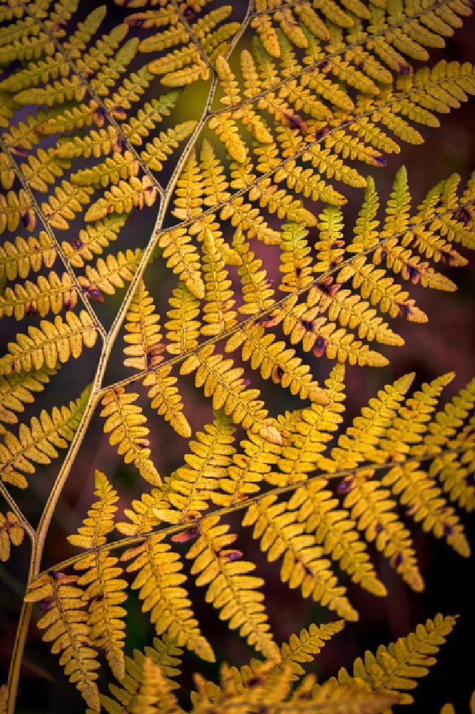 Photo in Nature #autumn #arizona #az #white mountains