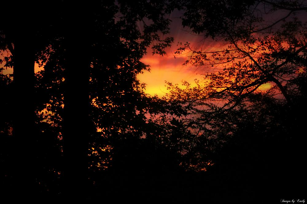 Photo in Landscape #sunset #trees #nature