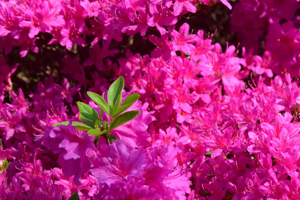 Photo in Nature #pink #spring #park