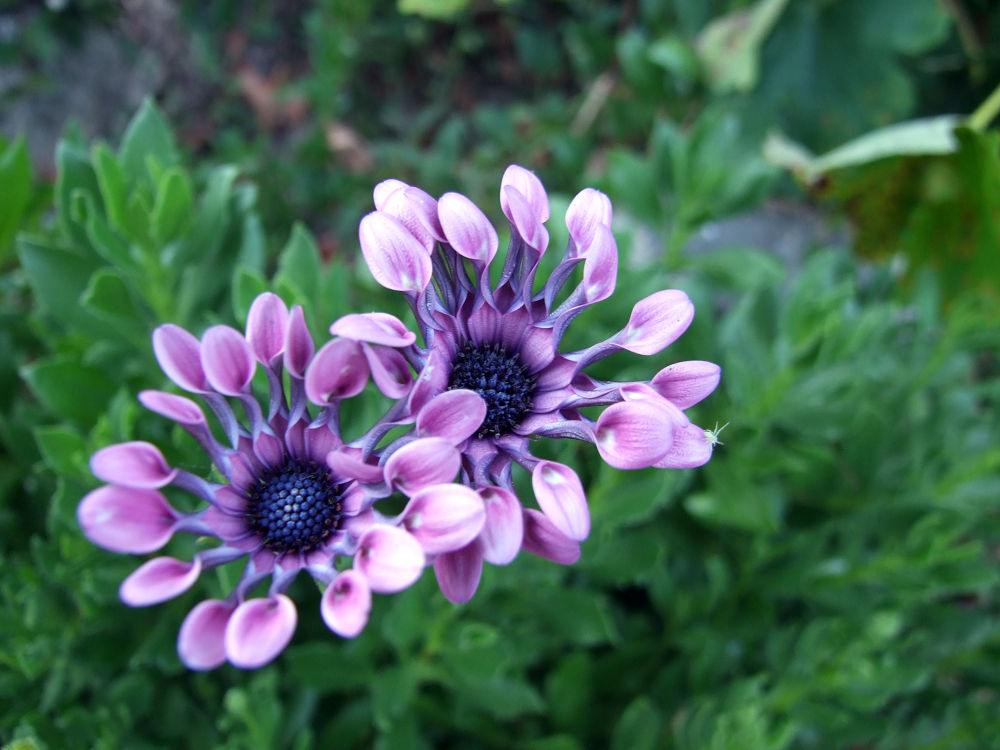 Photo in Random #wild life #flowers #garden