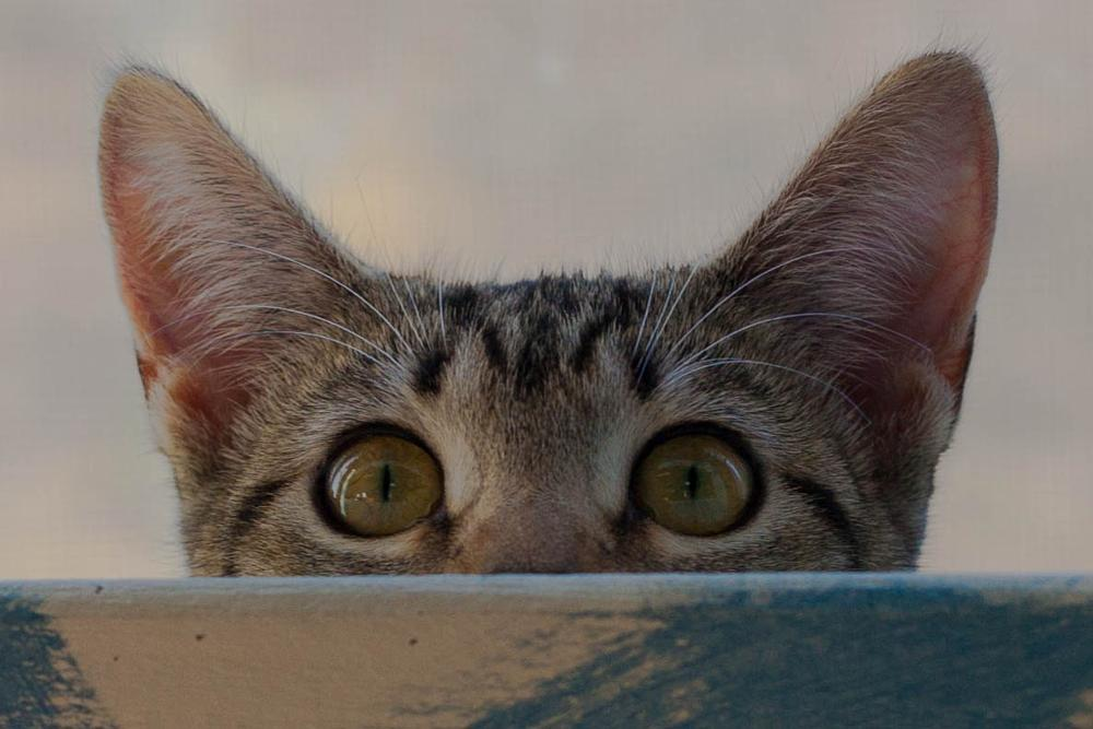 Photo in Animal #cat #kitty #feline #closeup