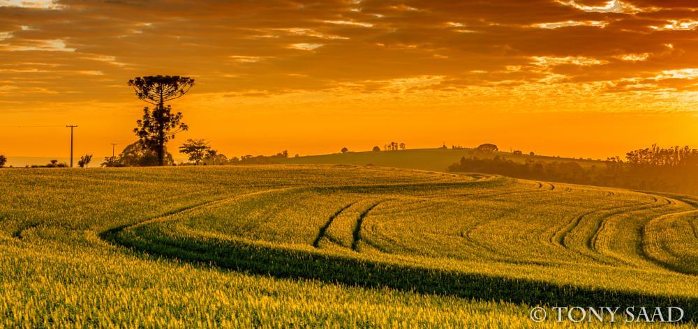 Photo in Rural #sunset #golden hour #rural