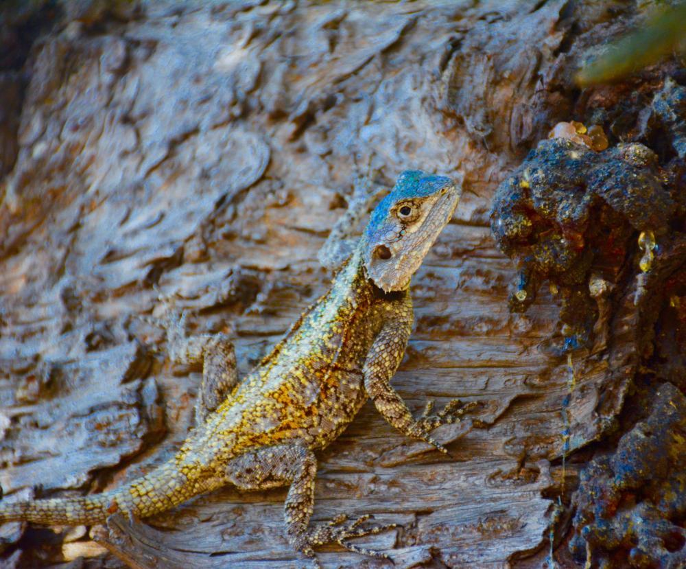 Photo in Animal #animal #reptile #lizard