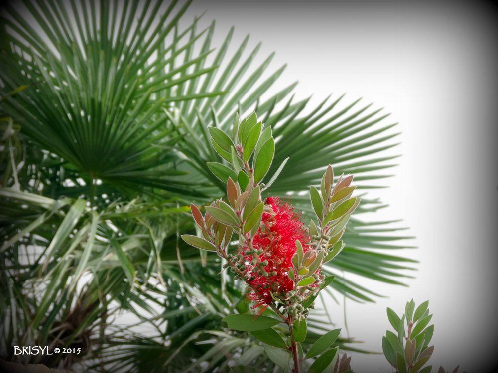 Photo in Nature #fleur #végétaux #couleur #nature