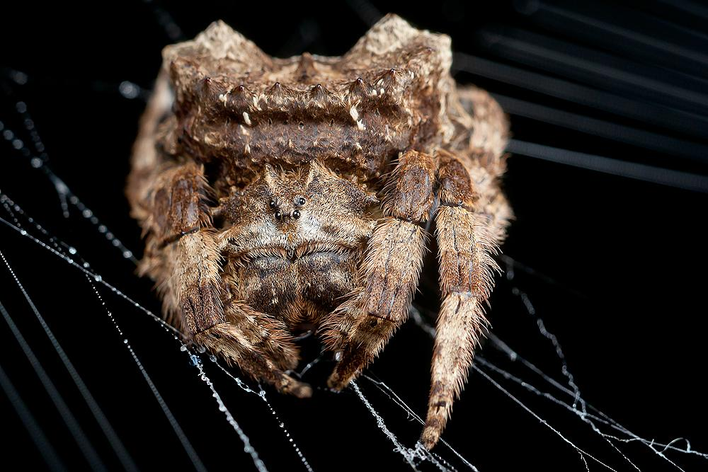 Photo in Macro #macro #spider #insect